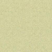 Tallone_limitataR